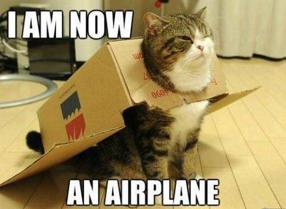 Top-30-Funny-Cat-Memes-Hilarious